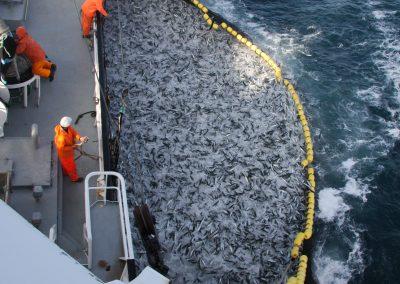 God fangst
